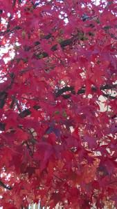il disordine delle foglie